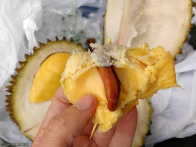 ciri dan asal usul durian musang king