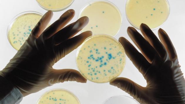 12 Bakteri Berbahaya di Dunia
