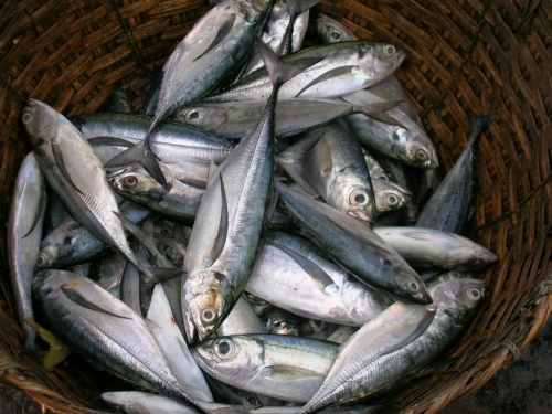 Resultado de imagem para peixes no cesto