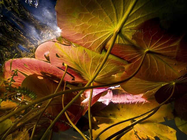 الغطاء النباتي في قاع بحيرة ، استخدام الكاميرا تحت الماء تُظهر لنا صور رائعة لجمال قاع البحر!