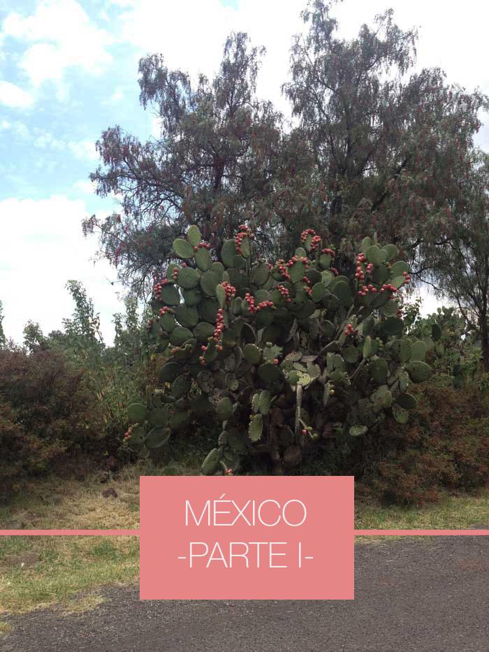 México-Cactus