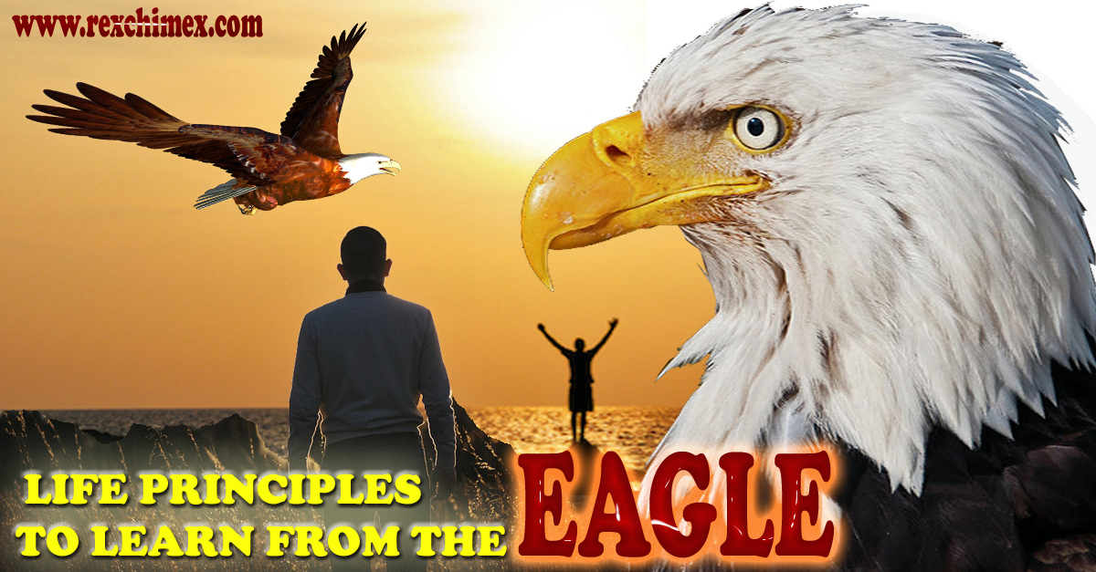 LIFE PRINCIPLES TO LEARN FROM THE EAGLE|-|Rex Chimex Blog