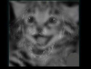 اكتشف شخصيتك اكثر من خلال الحيوان  الذي رأيته أولاً في الصورة
