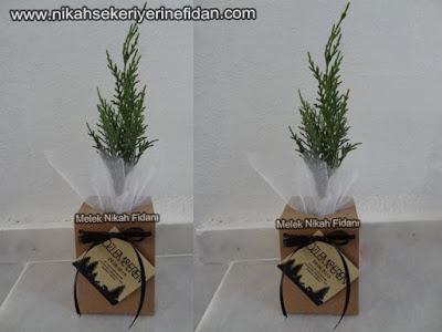 Özlem Eren nikah bitkisi fidanı 4