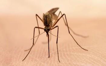 Νέα αποτελεσματική μέθοδος για να εξολοθρεύσετε τα κουνούπια!