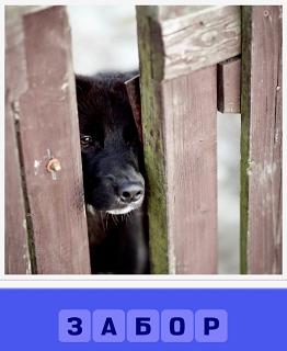в дырке в заборе виден нос собаки черный