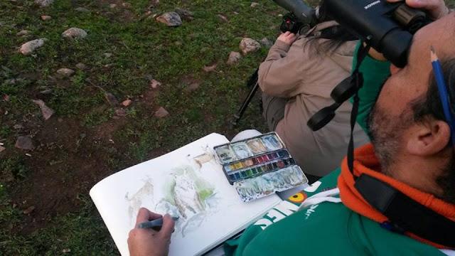 Safari artístico EN TIERRA DE LINCES. Diego Ortega Alonso, ilustración y pintura de naturaleza