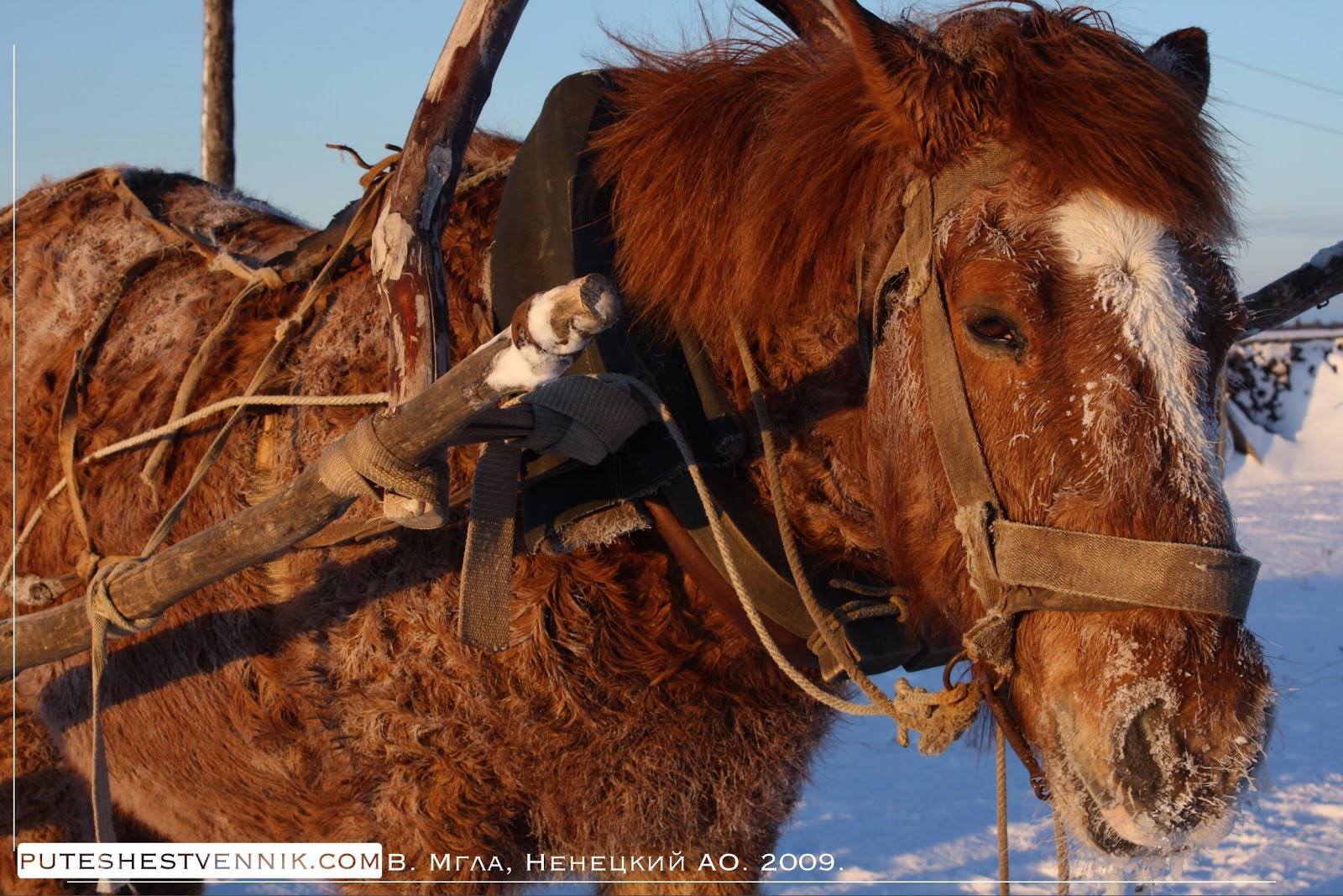 Запряженная лошадь зимой