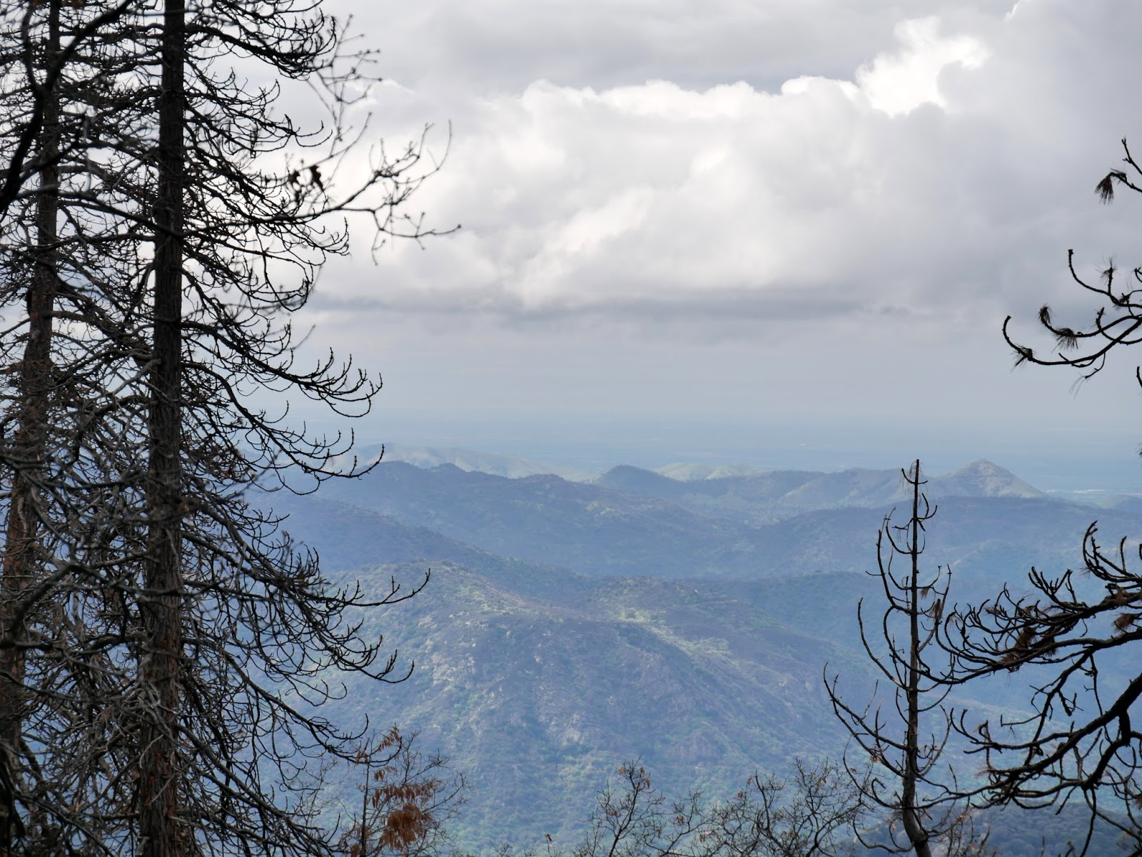 American Travel Journal: Generals Highway - Giant Forest to
