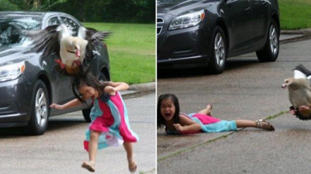 Budak Perempuan Popular Selepas Gambar Diserang Angsa Viral