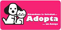 http://www.yosoyplaya.com/2013/08/adopciones-de-mascotas-playa-del-carmen.html