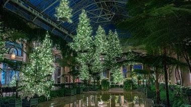 Árboles de Navidad suspendidos en el Pasaje de los Helechos de Longwood Gardens
