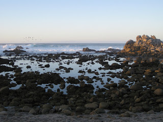 Waves break offshore, rocky tide pools still as glass, Pacific Grove, California