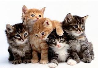 Kedilerin Şifa Verme Özelliği