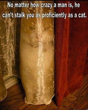 Cat funny hiding
