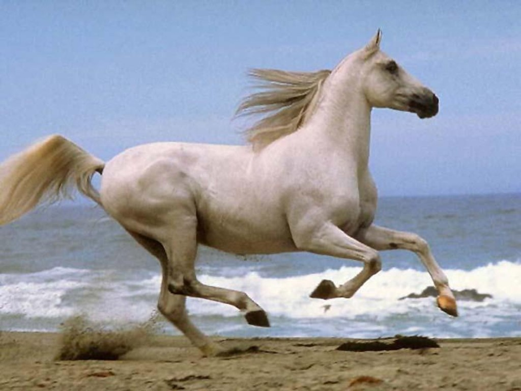 HD Animals Wallpapers: 09/28/11