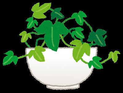 アイビーのイラスト(観葉植物)