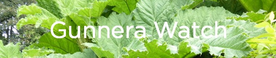 Gunnera Watch