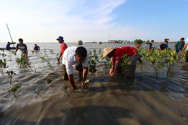 Merawat mangrove, menjaga pesisir