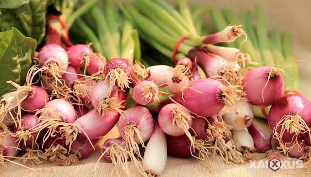 10 Manfaat Bawang Merah Untuk Kesehatan Tubuh