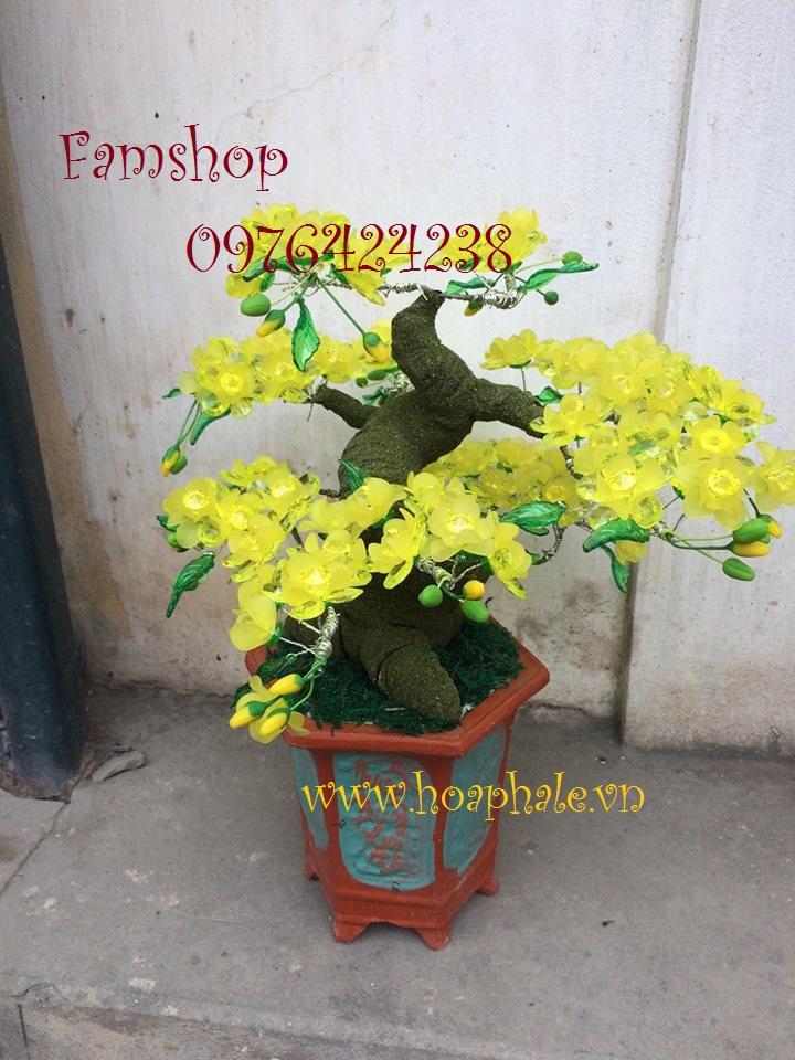 Goc bonsai cay hoa mai o Thi Sach