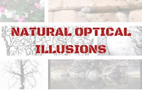 Natural Optical Illusions