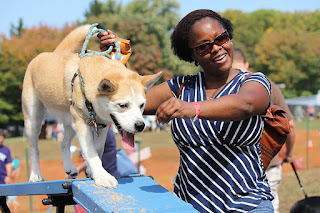 Woman with dog on agility course