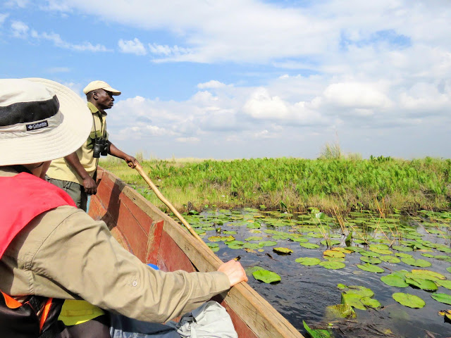 Boat safari on Mambamba Swamp in Uganda