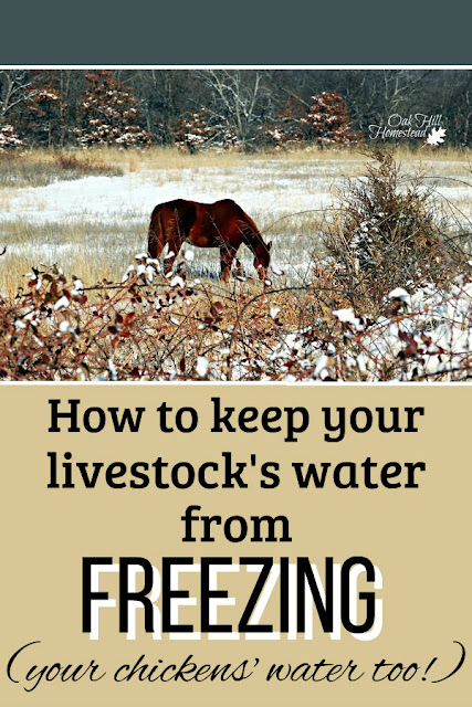It's a challenge to keep water thawed and drinkable in the winter. Here are tips to keep livestock and poultry water unfrozen.