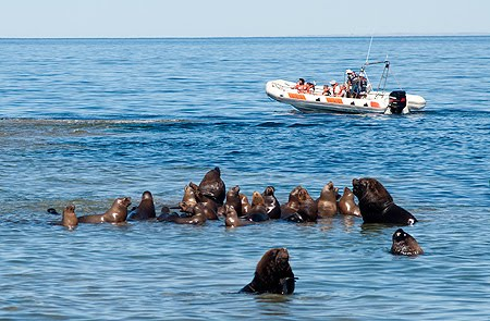 Photograph Nature in Peninsula Valdes sea lions