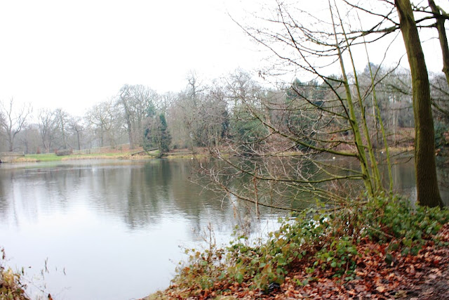 Photo of the lake with leaves on the banks and a winter tree
