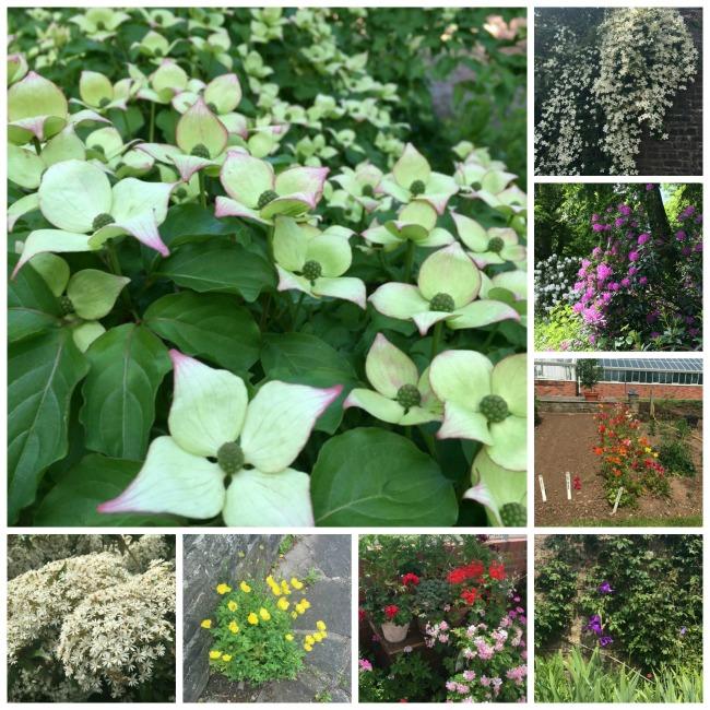 collage-flowers-Dyffryn-gardens