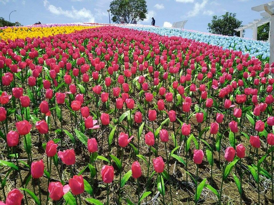 20 thousand glowing flowers in bohol jardin necitas for Jardin necitas