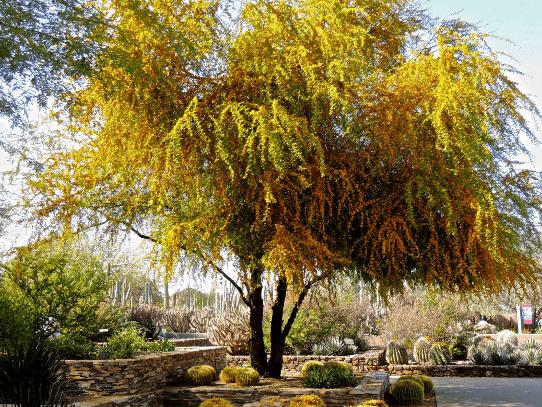 Pohon Yang Bagus Untuk Taman Di Halaman Rumah Anda