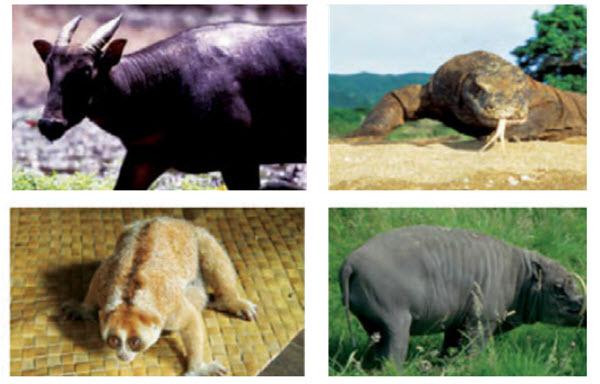 fauna indonesia tengah
