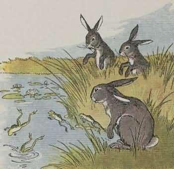 Dongeng Kelinci yang penakut dan Kodok - BACAAN CERITA