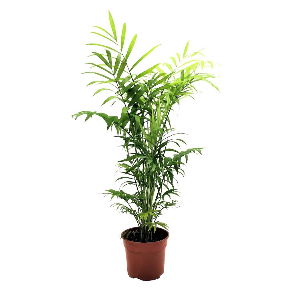 Top Air Purifying Plants For Your Homes And Work Places