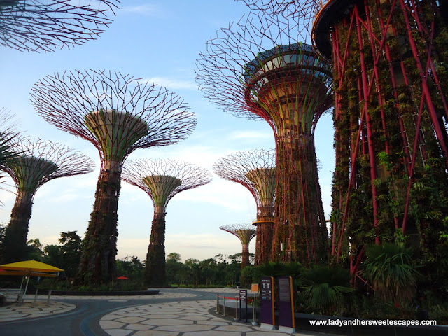 Super Trees in Gardens by the Bay