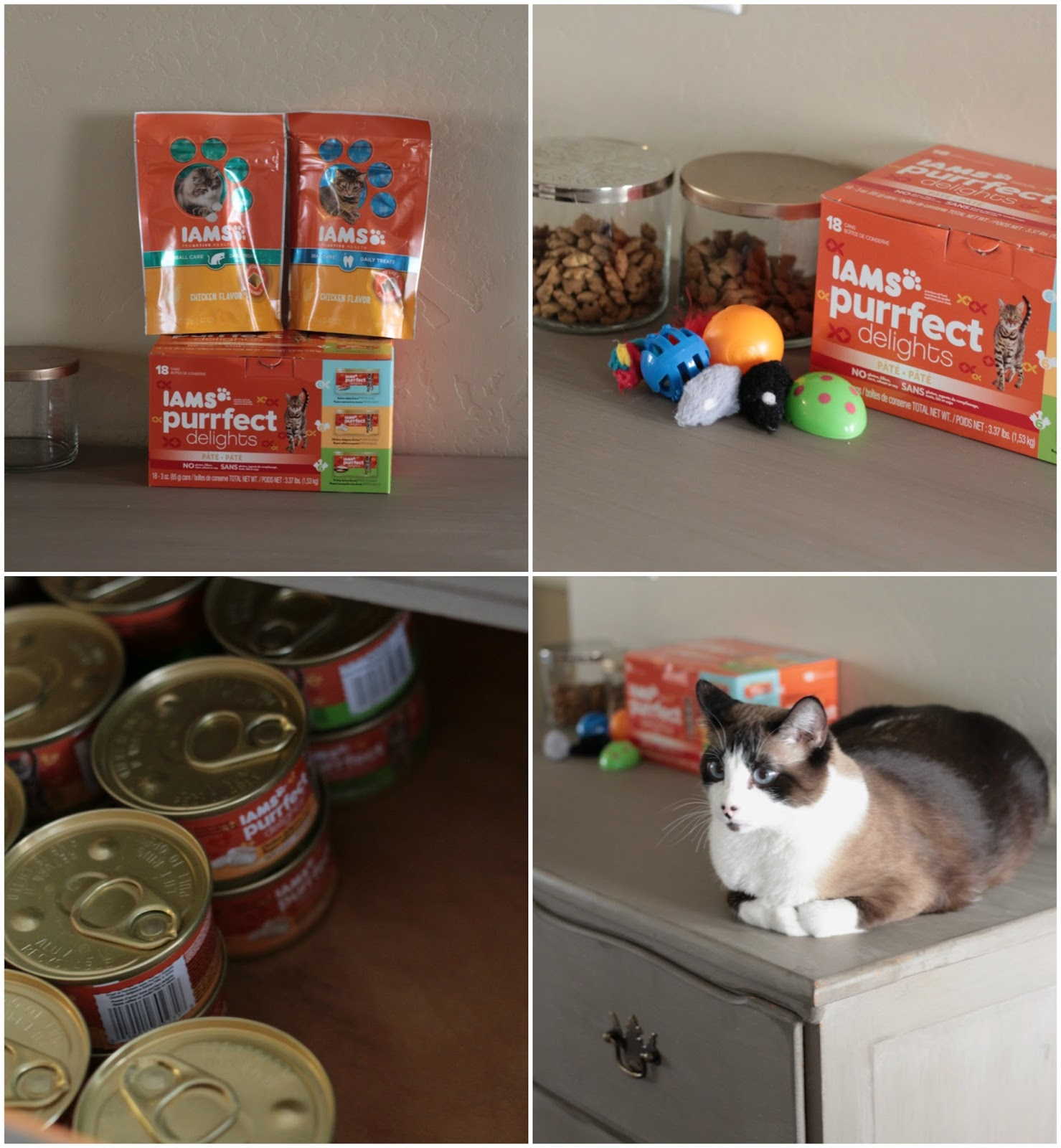cat-station-0989