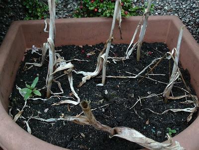 How to plant bulbs Beginner's guide - Green Fingered Blog