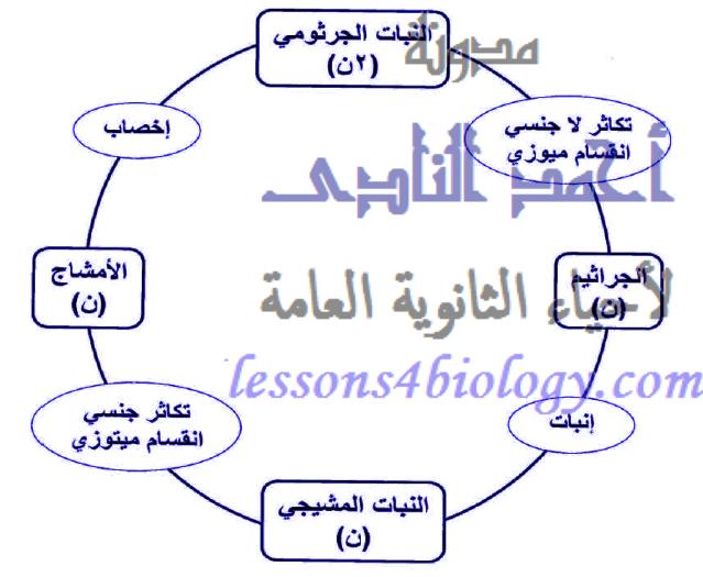 دورة حياة الفوجير - ظاهرة تعاقب الأجيال