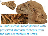 https://sciencythoughts.blogspot.com/2014/12/a-baurusuchidcrocodyliforme-with.html