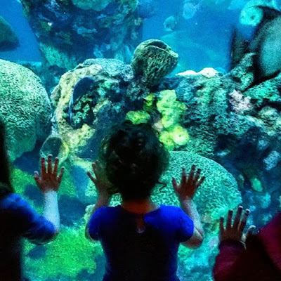 Gemma checking out the big tank at the Tennessee Aquarium