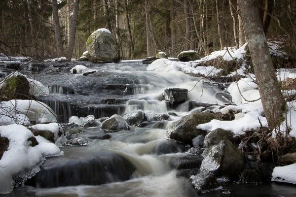 koski metsä photography valokuvaus