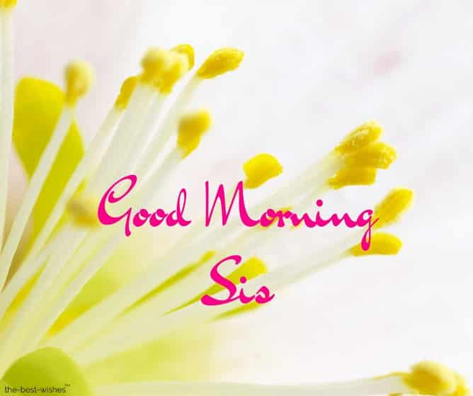 good morning sis pictures