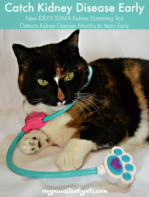 By detecting kidney disease in cats early on with the help of IDEXX SDMA Kidney Screening Test, cat parents and veterinarians can work together to help their cats live longer, happier, healthier lives even with the disease.