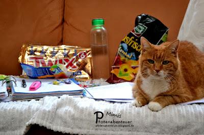 Katze Mimi liegt auf Arbeitsblättern