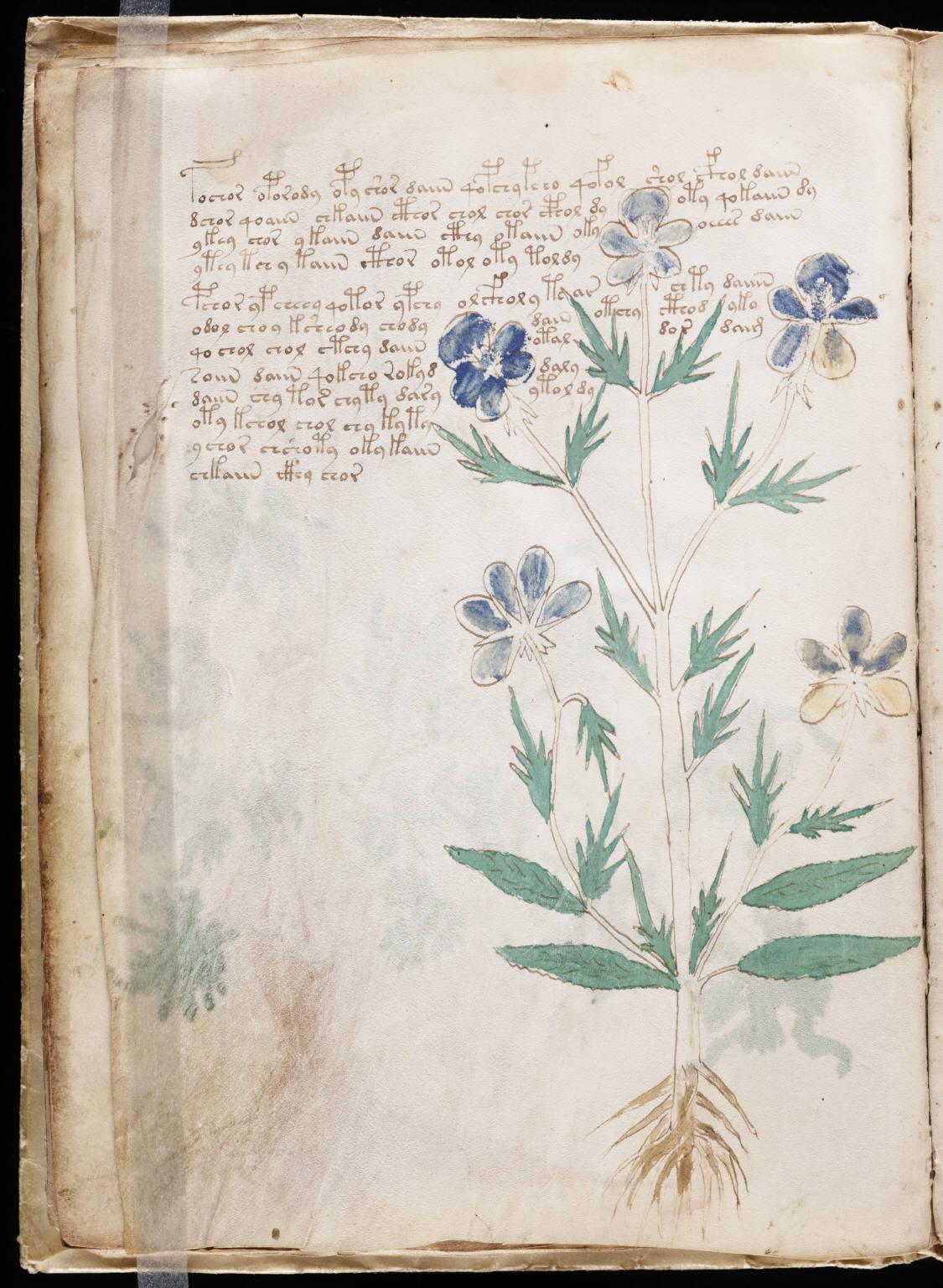 manuscrito020