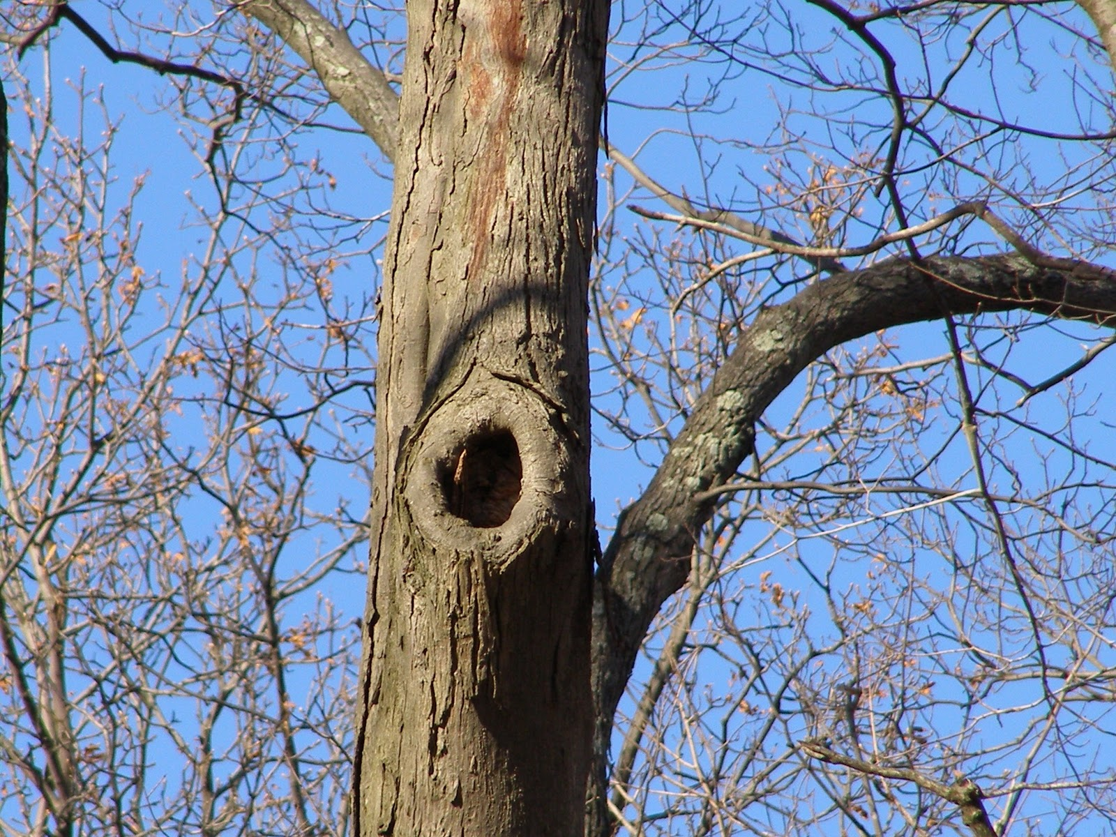 Blue Jay Barrens: Tree Holes