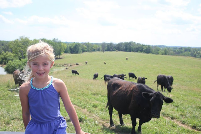 A little girl overlooks a herd of cattle